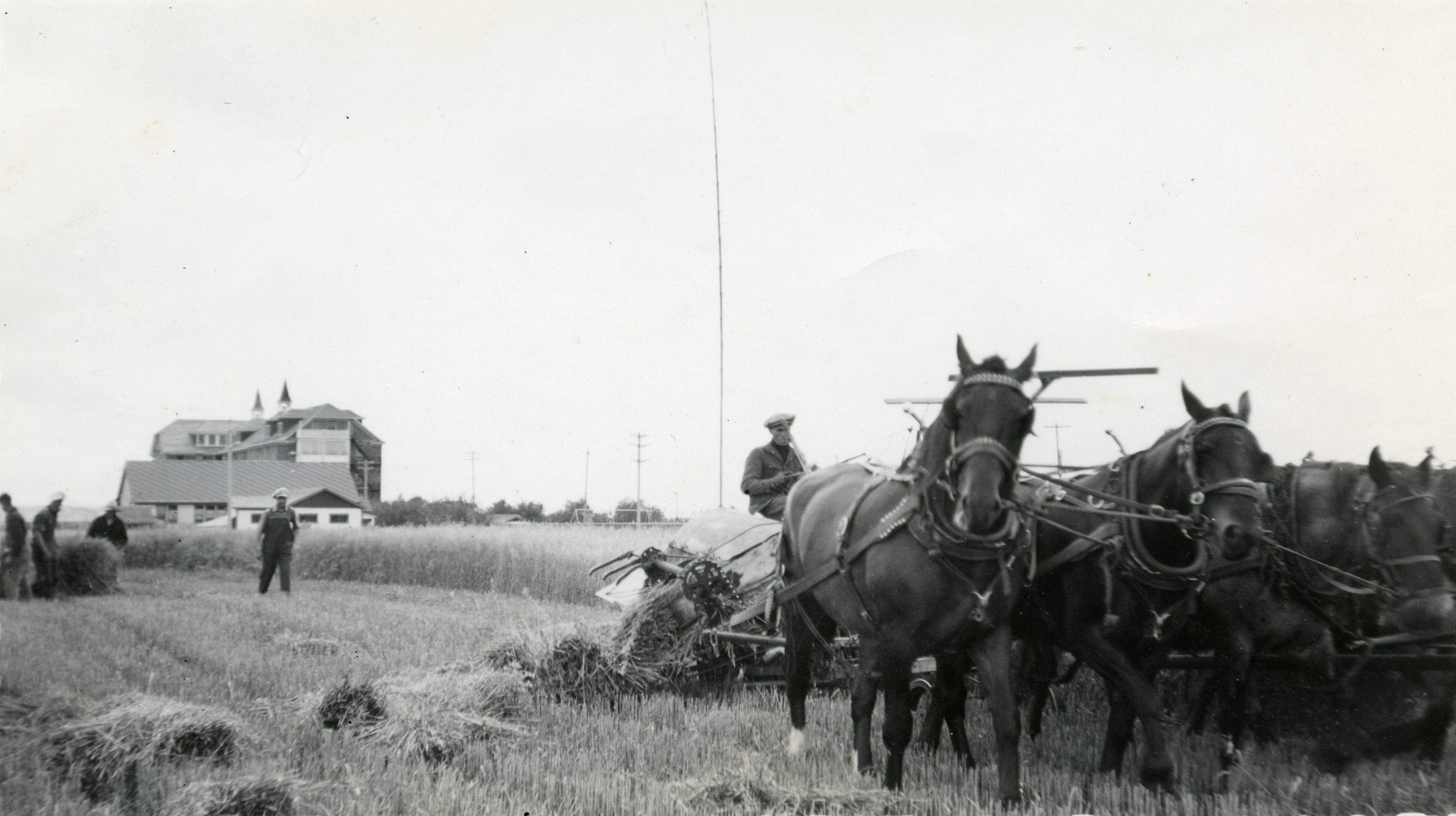 Buy depo provera for horses.doc - In Canada