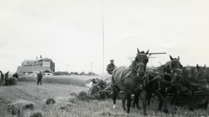 Horses plowing field near Provincial Training School